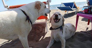 Per Pasqua riapre BAUBEACH®, la prima spiaggia per cani liberi e felici d'Italia (Maccarese, dal 19 aprile